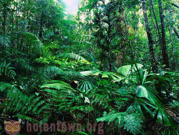 80+ Gambar Alam Hutan Paling Keren